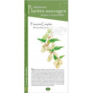 17 - Délicieuses plantes sauvages faciles à reconnaitre